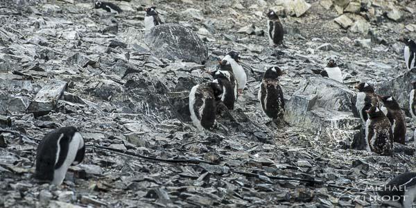 Als kleiner Junge bin ich im Winter mit den Pinguinen des Tierparks Hellabrunn in München spazieren gegangen. Schon damals faszinierten mich diese Bewohner der Antarkis.