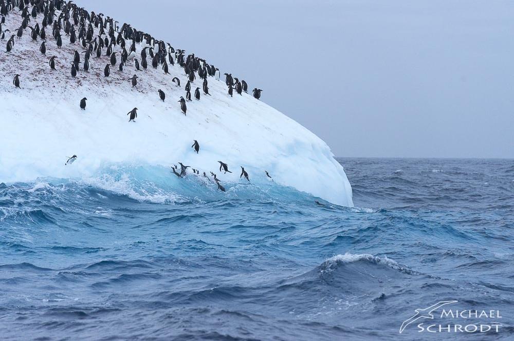 Pinguin Eisberg Buch Antarktis