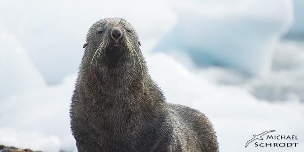 Antarktis bedrohte Tierwelt