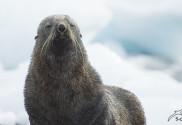 Antarktis Tierwelt