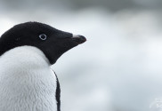 Tiere der Antarktis