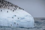 Wie leben Pinguine