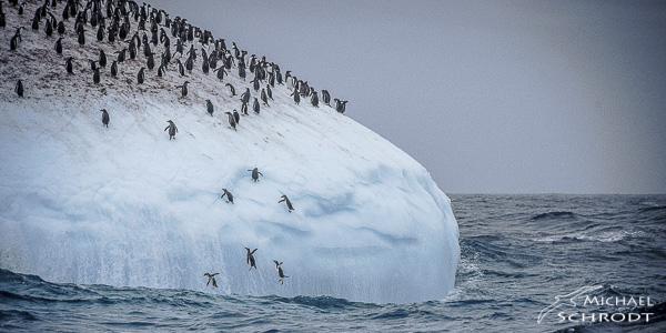 Wie leben Pinguine? - haben Sie sich gefragt. Als kleiner Junge hatte ich die Möglichkeit mit Pinguinen im Winter im Zoo spazieren zu gehen. Seitdem sind Pinguine eine meiner liebsten Tierarten. Irgendwann kam dann die Frage auf: Wie leben Pinguine? und kann man sie dort auch beobachten? Also brach ich zu einer Reise in die Antarktis auf um genau das herauszufingen. Bilder und Texte dieser außergewöhnlichen Reise, finden Sie in meinem Buch.